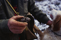 ca. March, 1999, near Norcia, Umbria, Italy --- Truffle Hunter Holding a Truffle --- Image by © Owen Franken/CORBIS