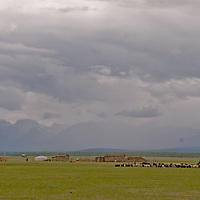 MONGOLIA, Darhad Valley.  A nomadic shepherd moves her family's flock near their temporary summer corrals.  The Horidal Saridag Mountains and other families' yurts (gers) are in the background.
