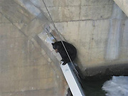 """14/04/2011<br /> Bear climbs On Dam<br /> It was a harrowing end, but officials who ordered a snip kill a bear stuck on a dam say they had no choice. Its a mystery just how the animal can to be precariously perches on a thin concrete wall at the dam in The Dalles, Oregon. The wall the bear became trapped on is called a spillway, and is very narrow with deep water both sides one 75 feet down. Workers from the U.S. Army Corps of Engineers at the dam called the Oregon Department of Fish and Wildlife, which sent a team of biologists to check out the bear. According to Army Corps of Engineers spokesman Scott Clemans, the ODFW biologists then called in police officers. Since this isnt a common occurrence at the dam, they all brainstormed ideas of how to handle the bear.\nAfter talking it over, they came to the conclusion there was no way to rescue the bear without putting someone at considerable risk. The bear was stuck in an isolated part of the dam and it would be too risky for anyone to safely reach it, said ODFW spokesman Rick Hargrave. The biologists also thought if they tranquillised the bear for a rescue there was a good chance it would tumble 75 feet down the downstream wall. If it survived the fall, they were concerned it would be injured and wander into a state park downstream of the dam. The bear was visibly under a lot of stress and was caught in some cables, Hargrave said. """"Collectively they decided the humane thing to do was to put the bear down because there was no safe way to rescue it and leaving it there was not an option,"""" Hargrave said. """"It's unfortunate the bear had to die.""""An Oregon State Police trooper fired and the bear fell into the water on the upstream side of the spillway, Hargrave said. After a while they lost sight of the bear in the water. Where the bear came from and how he ended up getting pulled down to The Dalles Dam were never going to know,¿ said Clemans. This time of year there is a lot of water flowing through the dam so juvenile sal"""