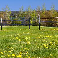 North America, Canada, Nova Scotia, Guysborough.  Spring awakens a field in Guysborough, Nova Scotia.