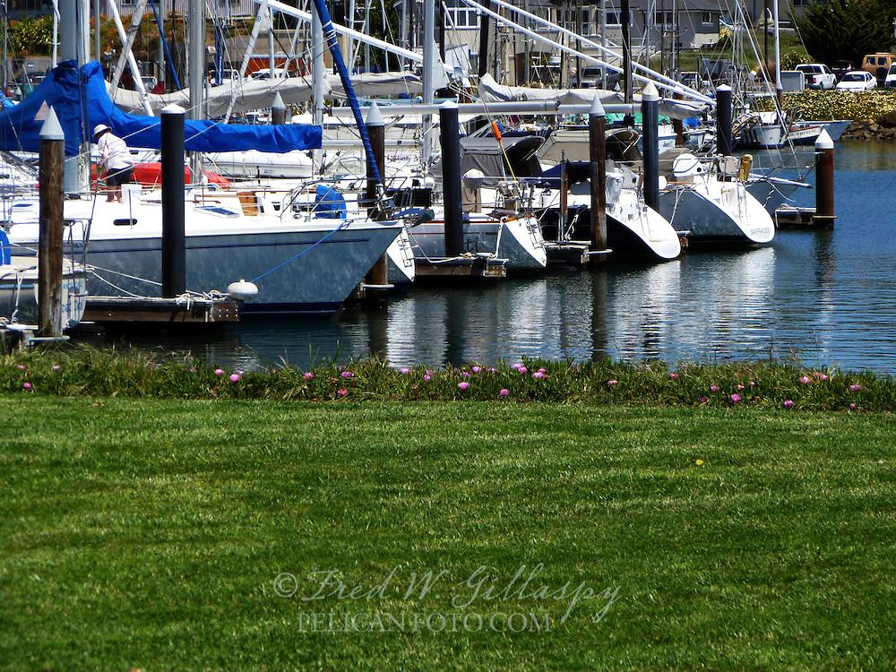 Santa Cruz Harbor 0288
