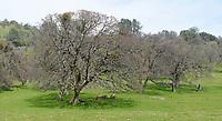 Trees in field. (26543 x 14416 pixels)