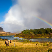 Fine art creation of a horse in a field, near a river and rainbow.