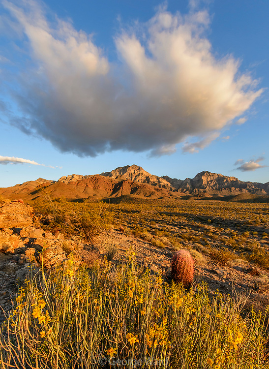 Cloud Formation, Menodora and Barrel Cactus at Sunset, Mojave National Preserve, California