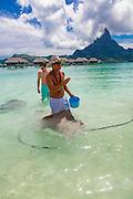 Sting Ray, InterContinental Bora Bora Resort Thalasso Spa, Bora Bora, French Polynesia