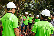 A group of smallholder farmers and RSPO field staff debrief after a workshop on a plantation in Ukui, Riau Province, Indonesia, on 16 June 2015. This area has become dominated by palm oil production, and some smallholder farmers have formed co-operatives to share costs, increase access to markets, and become certified by the Roundtable on Sustainable Palm Oil. The farmers are part of Amanah, a local cooperative that has helped over 400 farmers become RSPO certified - reducing their use of pesticides and fertilizers, increasing yields, and improving farm management. Smallholders account for 40% of global palm oil production, and as such play an important role in increasing sustainability within the industry.