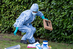 © Licensed to London News Pictures. 09/07/2020. London, UK. Police forensics recover a knife from bushes near Seeley Drive in West Dulwich, South London where a man, believed to be aged 18, was found stabbed to death on Wednesday evening. Photo credit: Ben Cawthra/LNP