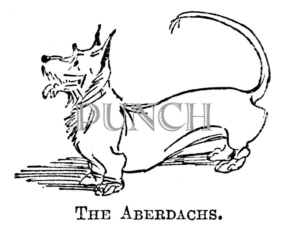 The Aberdachs