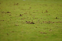 Photo: Paul Greenwood.<br />Blackpool v Norwich City. The FA Cup. 27/01/2007. The Blackpool pitch shows it's bad condition