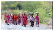Women returning from work in Rajasthan, India. Nikon D500, 600mm (900mm in full frame), f4, EV+0.67, 1/8000sec, ISO1250, Aperture priority.