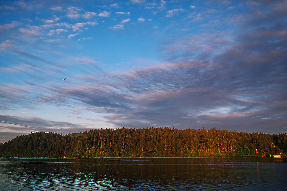 Sunset on Florence, Oregon's inlet shoreline with a thick ridge of trees and calm water. An eagle flies high above the water with a beautiful blue sky and a streak of clouds in the background.