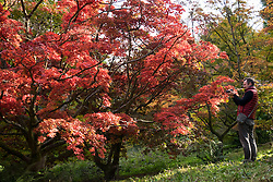 © Licensed to London News Pictures. 22/10/2016. Godalming, UK.  A man takes a photograph of the autumn displays of colour at Winkworth Arboretum in Surrey today.  Photo credit: Rob Arnold/LNP