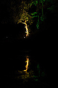 Illumination of a tre reflected in the lake at Hestercombe Gardens, Cheddon Fitzpaine, Somerset, England. Part of the Illumina Project by Ulf Pedersen.
