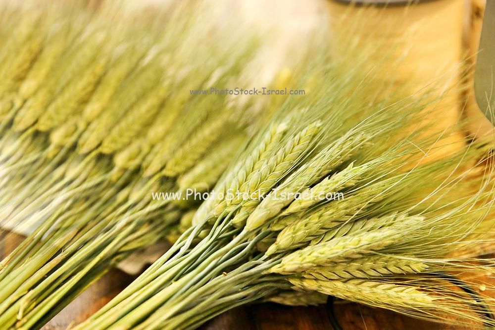Freshly harvested wheat stalks