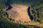 USA, Oregon, aerial landscape of a clearcut.