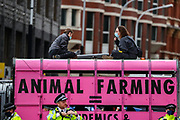 Animal Rebellion activists glued themselves inside a pink Truck and parked it in Victoria Street outside the department for social care on Thursday, Sept 3, 2020. Environmental non-violent activists group Extinction Rebellion enters its 3rd day of continuous ten days to disrupt political institutions throughout peaceful actions swarming central London into a standoff, demanding that central government obeys and delivers Climate Emergency bill.