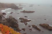 Ice Plant, Ocean Mist, Duncan Cove State Beach, Sonoma County Coast, California beaches, ocean waves, igneous rock, wild flowers, rocky coast, Pacific Coast Highway