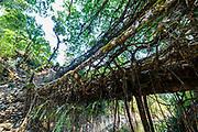 Double Decker Living Root Bridge, Sohra or Cherrapunjee, Meghalaya, India