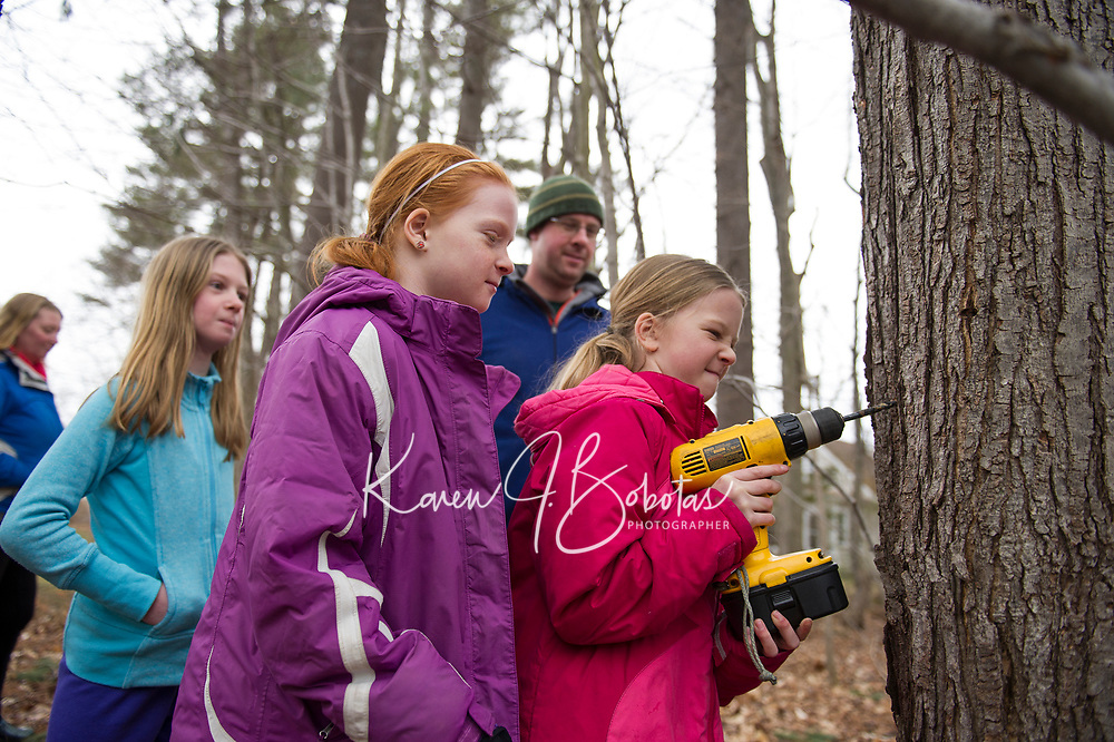 Becky, Anna, Julia and Marc Herrmann watch as Katelyn drills a hole for the spigot as they begin tapping trees on Sunday afternoon at their father in law's yard for the upcoming maple syrup season.  (Karen Bobotas/for the Laconia Daily Sun)