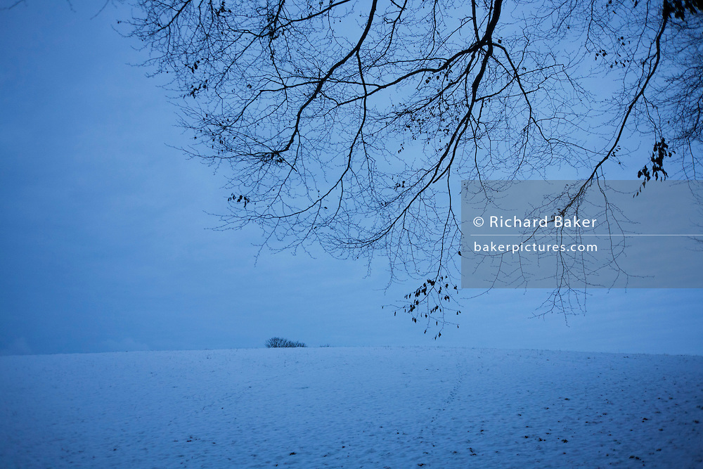 Bleak landscape of cold English fields and bare trees during wintry conditions in North Somerset.