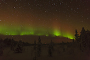 Aurora Borealis display over the forest, to the northwest of Inari in northern Finland.