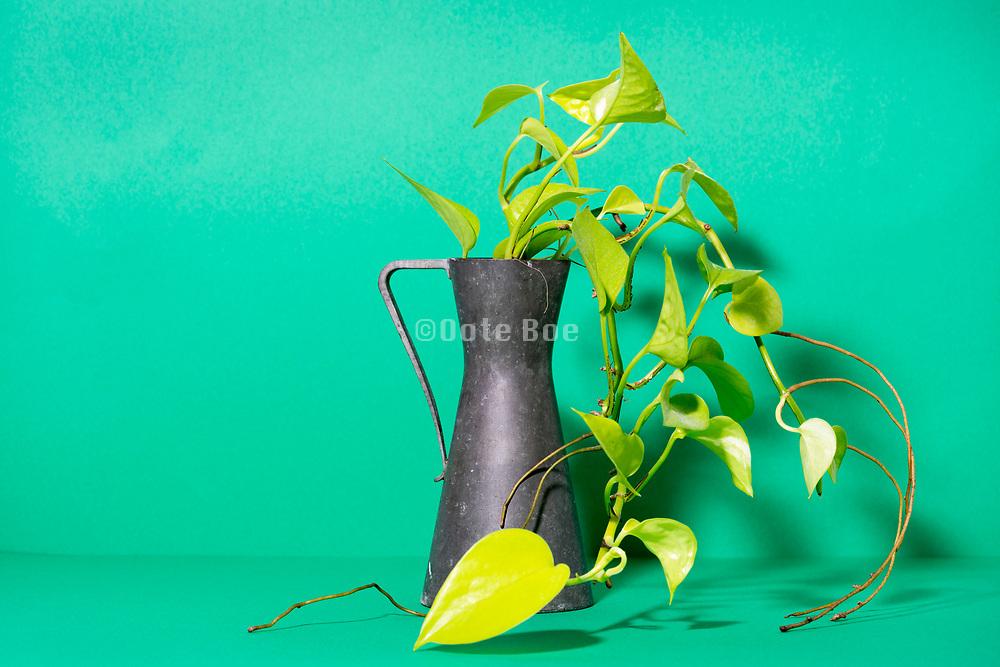 plant twigs still life
