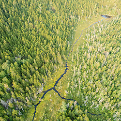 A stream and conifer forest near Greenlaw Mountain in Northwest Somerset, Maine. Boundary Mountains region. Site of proposed CMP transmission corridor.