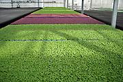 Nederland, Westland, 12-3-2020 Ultramoderne kas van het brdrijf Koppert Cress . Verlicht dmv ledverlichting en verwarmd en gekoeld mbv aardwarmte . Ook huizen in de ongeving worden door het bedrijf verwarmd . Kas, kassen in het kassengebied van het Westland. Er worden cressen in gekweekt. Kleine plantjes, kruiden,  met een sterke smaak.  Het gebied tussen Naaldwijk en de kust is belangrijk vanwege de tuinbouw. Hier liggen de kassen tussen de rand van de bebouwde kom en de duinen, duingebied . Foto: Flip Franssen