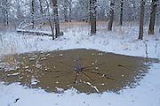 Early winter in the Seine River Forest.<br /> Winnipeg<br /> Manitoba<br /> Canada
