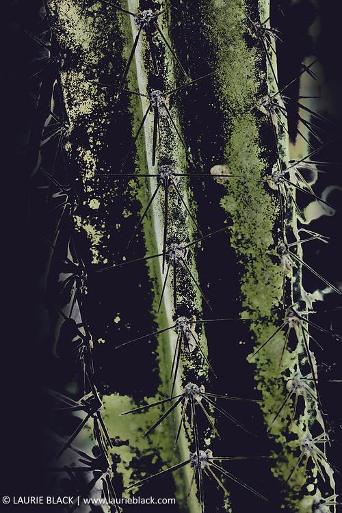 Abstract cactus art photo