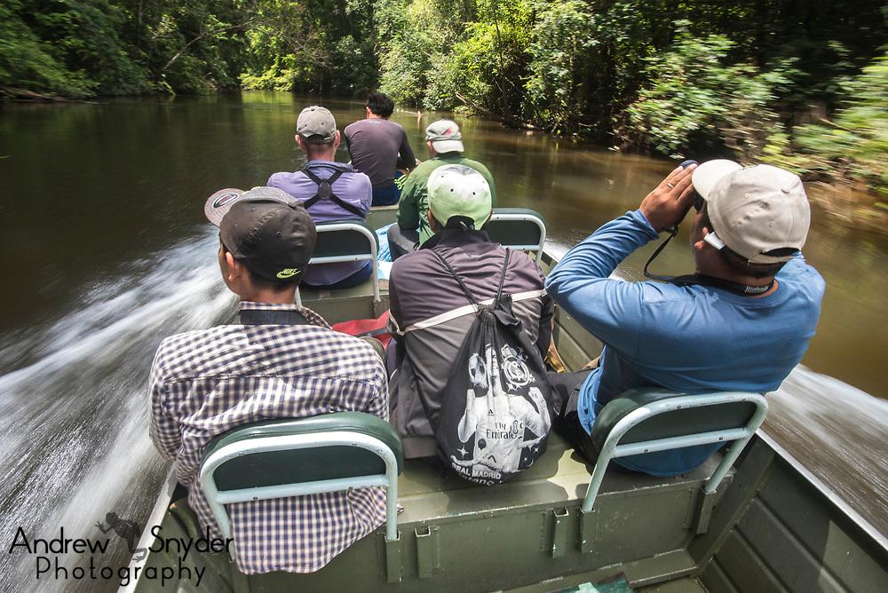Conducting bird surveys in Mapari Creek, Kanuku Mountains.