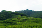 vineyard kaefferkopf grand cru ammerschwihr alsace france