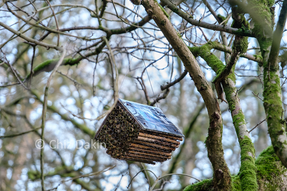 """""""Bee Books"""" - innovative nesting colonies for solitary bees (whose numbers are in critical decline) in the woodlands near Janet's Foss"""