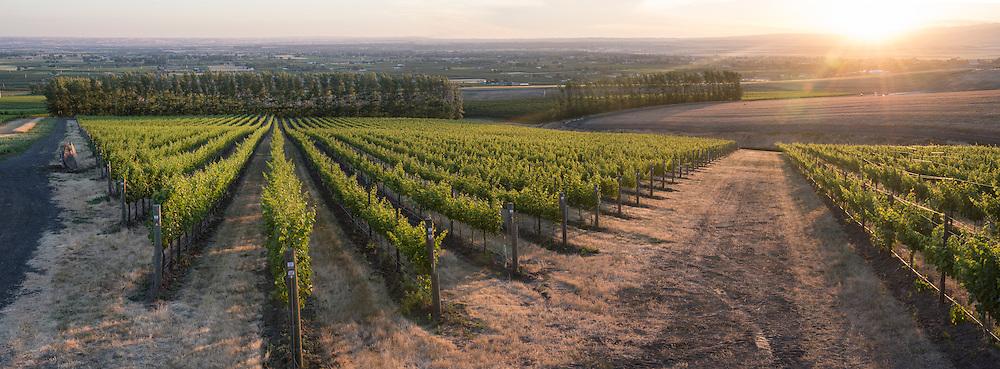 Drew Bledsoe's Doubleback winery summer solstice party at McQueen Vineyard overlooking Walla Walla, Washington