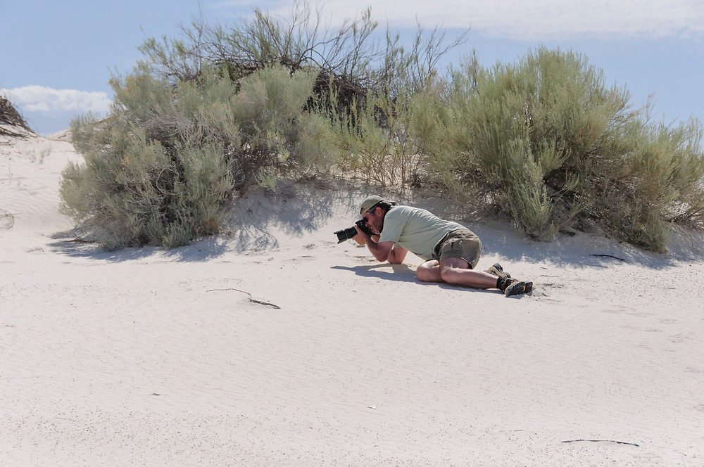 Bleached earless lizard, Holbrookia maculata ruthveni, White Sands National Monument, Alamogordo, New Mexico