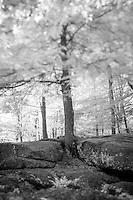 Infrared at Sculptured Rocks, Groton NH.©2016 Karen Bobotas Photographer
