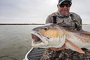 24lb redfish