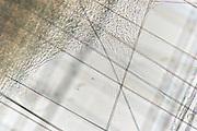 The living cells use the silk fibers to grow along it. The silk provides the cells with good adhesion, supports cell movement and promotes cell division | Die lebende Zellen benutzen die Seidenfasern, um daran entlang zu wachsen. Die Seide bietet den Zellen gute Haftung, unterstützt die Zellbewegung und fördert die Zellteilung