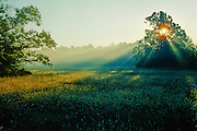 Early morning rays of light break through a tree onto a foggy, dew covered field.