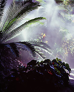 Mist falling over tropical cycads and orchids in Marnie's Pavilion, Denver Botanic Garden, Denver, Colorado.