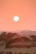 Trees in the desert sunset, Skeleton Coast, Northern Namibia, Southern Africa
