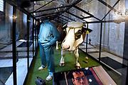 Perspreview 50 jaar Koninklijk Paleis Amsterdam.<br /> <br /> Op de foto: Gabber trainingspak en de gekloonde stier Herman