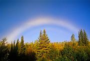 Fogbow (white rainbow) over boreal forest<br /> Clear Creek<br /> Yukon<br /> Canada