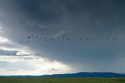 birds flying over a mountain range in New Mexico