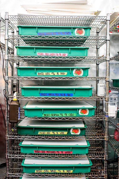 """Baltimore, Maryland - June 23, 2016: City-Hydro uses food safe pizza proofing dough trays to grow their micro greens. Pictured is a rack of trays filled with germinating seeds.<br /> <br /> <br /> The Hounts' vertical farm, City-Hydro, is located where their former home theater room existed. Last year they sold 2300 trays at $30 per tray. Average grow life from seed to plate is 7-10 days and the room can generate 100 trays in that time. <br /> <br /> The lights, which City-Hydro custom make from 5500 Kelvin temperature LED tape, are why their outfit is profitable. """"They're cool to the touch,"""" says Larry Hount, which means they don't consume excess energy to cool the room. The room runs on $125 a month on electricity. <br /> <br /> City-Hydro owners Larry and Zhanna Hount started growing microgreens in a spare room in their Baltimore rowhome a year and a half ago. Since then, their vertical farm has earned them $120k a year. They sell their crop directly to local restaurants, but, """"What we want to be at the end of the game is a supplier..."""" says Larry. The couple sell their custom made racks, which use daylight balanced LED lights and offer training. <br /> <br /> <br /> CREDIT: Matt Roth for The New York Times<br /> Assignment ID: 30191904A"""