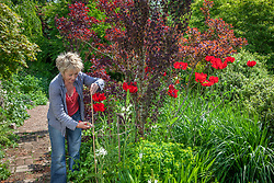 Carol Klein trimming canes stakes on poppies to correct height