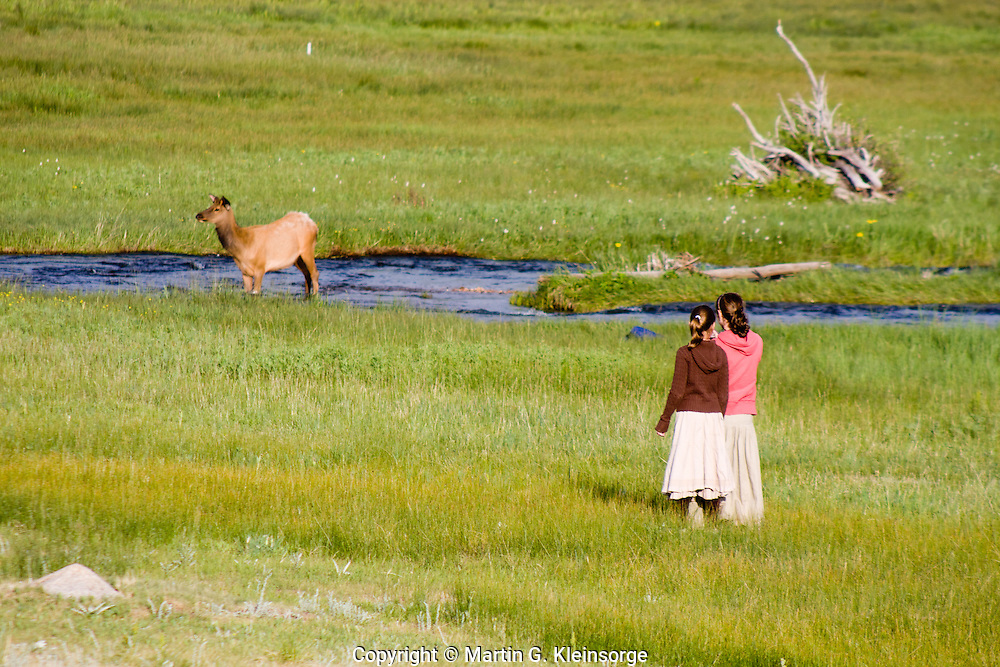 Visitors observing and photographing a cow elk crossing the Big Thompson in Moraine Park.  Rocky Mountain National Park, Colorado.