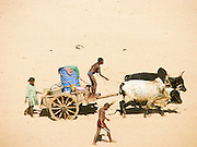 Africa, Madagascar, Children driving an ox cart to bring water back home