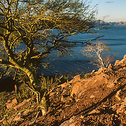 Sparce vegetation on the coast of the Sierra de la Giganta in the Bahia de Loreto National Park, the Baja Peninsula and the Sea of Cortez, Mexico.
