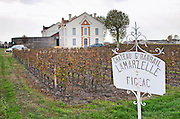 Vineyard. Chateau Grand Barrail Lamarzelle Figeac. Saint Emilion, Bordeaux, France